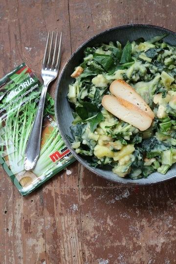 Rezept Cicoria catalogna-Salat mit warmem Kartoffeldressing und Räucherkäse
