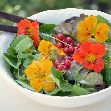 Rezept Kräutersalat mit Kapuzinerkresse