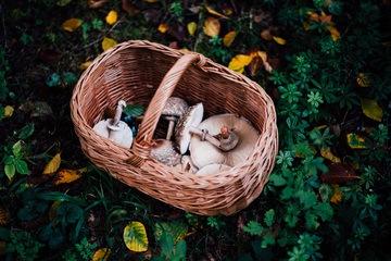 Rezept Schnitzel aus Parasolpilzen und Safranschirmlingen