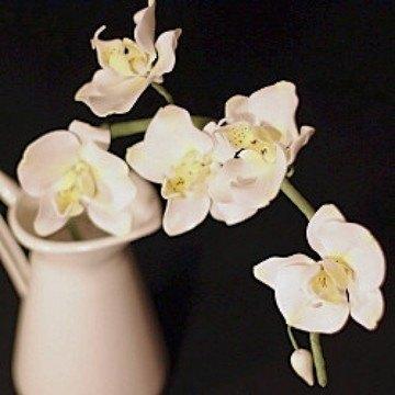 Rezept weiße Zuckerorchidee