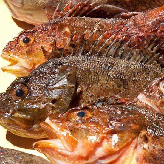 Rezept Einfache Fischsuppe