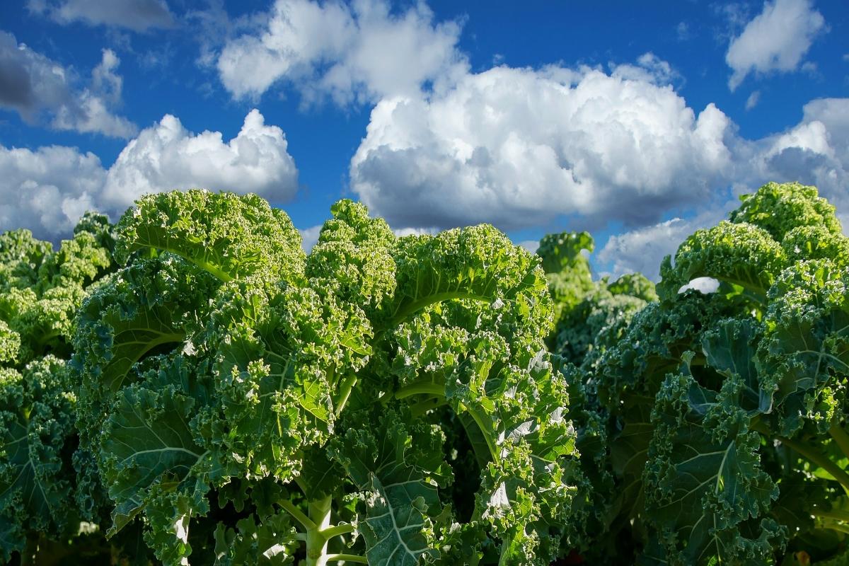 Nationale boerenkooldag, in beeld