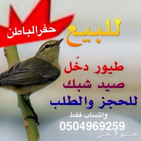 للبيع طيور دخل