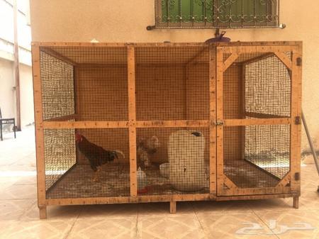 للبيع عشه دجاج خشب مترين في متر وعشرين سم دي
