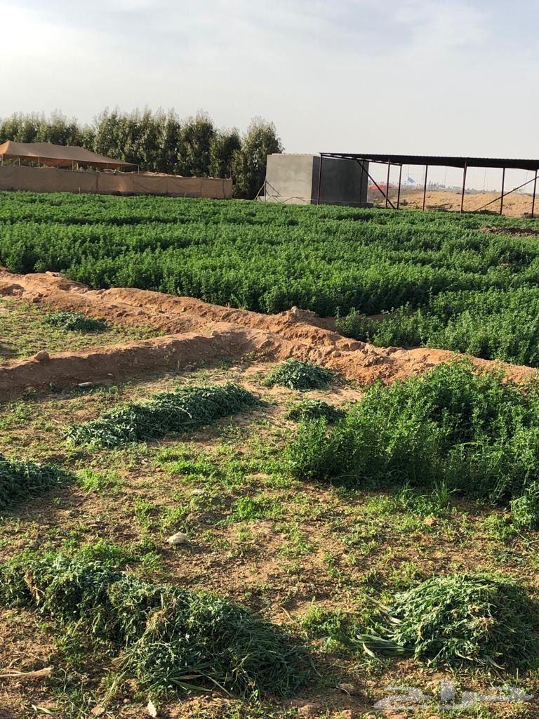 مزرعة في العرفاء الهجن قريب من كوبري عشيرة