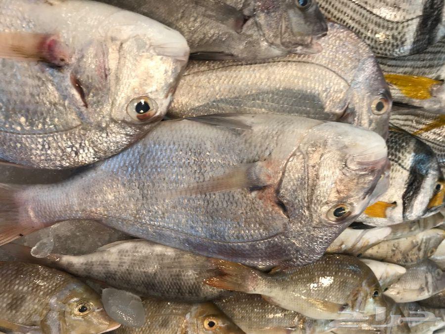 سمك وربيان طازج