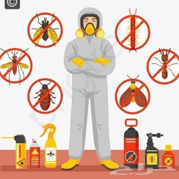 شركة مكافحة حشرات بالمدينة المنورة رش مبيدات