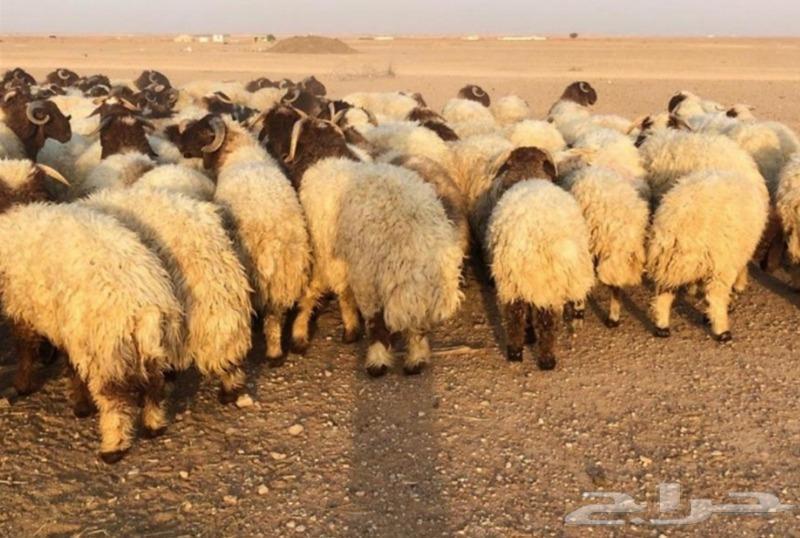عروض الذبائح الرياض