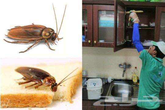 شركة مكافحة حشرات شركه رش مبيدات بجده