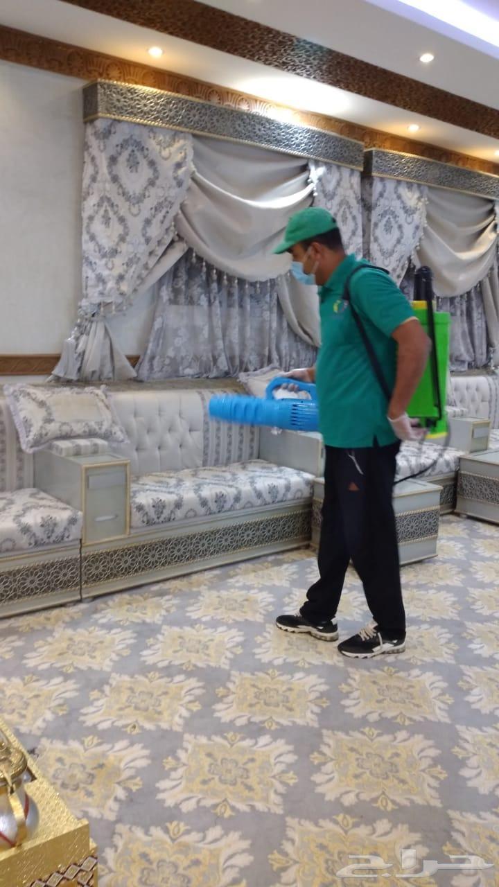 شركة مكافحة حشرات رش مبيدات نمل صراصير فئران