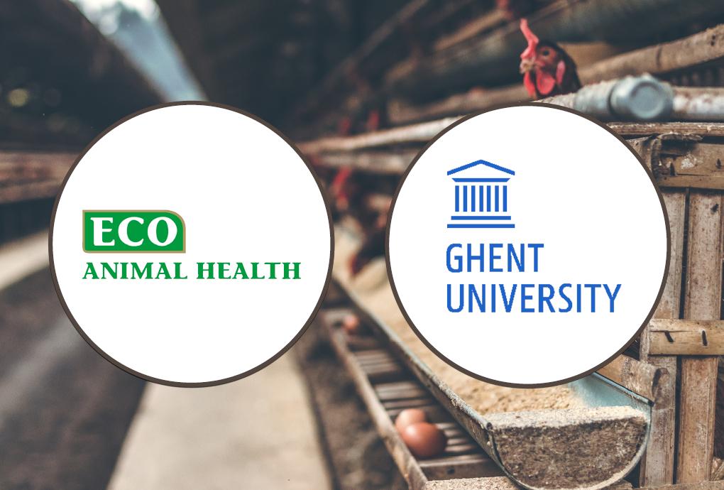 ECO Animal Health & Ghent University - Clostridium perfringens Vaccine - IN-PART Case Study - Header Image