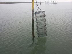 Lanterne di rete multipiano per molluschi - Lotto 3 (Asta 2111)