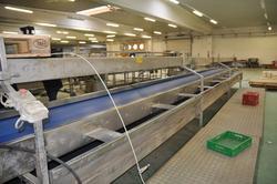 Fennel processing line - Lot 12 (Auction 2228)