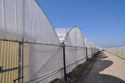 Multiple spans greenhouse and packing materials - Lot 0 (Auction 22280)