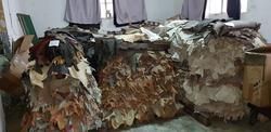 Ovine leather - Lot 46 (Auction 2618)