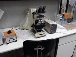 Gelaire laminar flow hood and Olympus BH2 microscope - Lot 20 (Auction 3675)