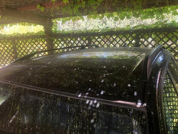 3#43070 Autovettura BMW X5 in vendita - foto 13