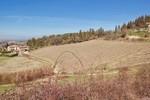Immagine 7 - Ramo di azienda dedita a coltivazione di vigneti e produzione di vini in Chianti - Lotto 1 (Asta 4598)