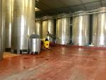 Immagine 336 - Ramo di azienda dedita alla produzione e commercio di vini e prodotti liquorosi - Lotto 1 (Asta 45980)