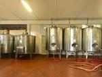 Immagine 347 - Ramo di azienda dedita alla produzione e commercio di vini e prodotti liquorosi - Lotto 1 (Asta 45980)