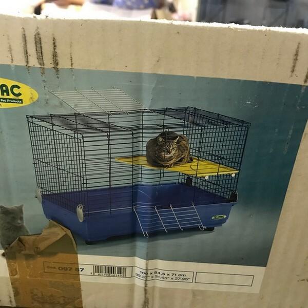 85#6109 Oggetti per animali domestici in vendita - foto 82