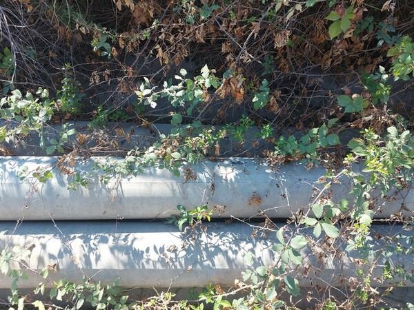 3#6134 Pali in cemento in vendita - foto 19