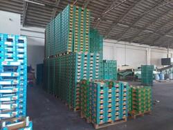 Citrus fruit boxes and manual pallet trucks - Lot 6 (Auction 6208)