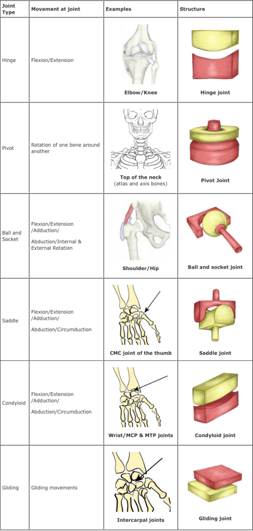 Joints By Victoria Marie Winter Infogram