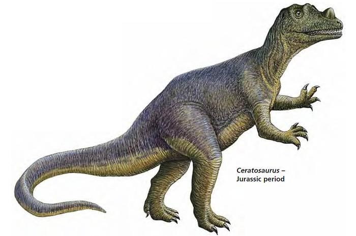 Jurassic period plants and animals - photo#8