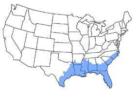 The American Alligator By Bassgrabber Infogram - Map of alligators in us