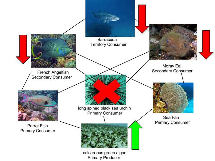 Green Sea Urchin Food Web besides Diy Acrylic Aquarium Plans additionally Conseil Aquarium Eau De Mer Passion Reflechie moreover Hereford Cow Herd Photos Hd Wallpapers together with How To Tie A Game Fishing Double. on saler fish