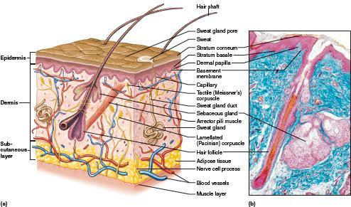 Urinary System by amykunz - Infogram