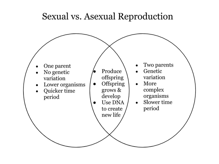 Non sexual reproductive characteristics