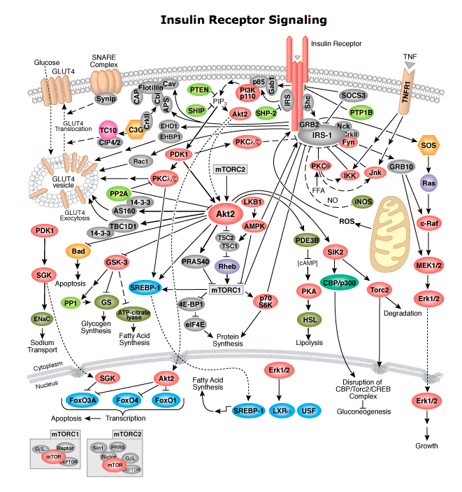 Cell signaling project by kennyewest infogram cell signaling pathways ccuart Image collections