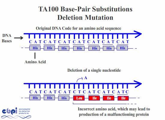 7 Types Of Mutations By Latajha Infogram