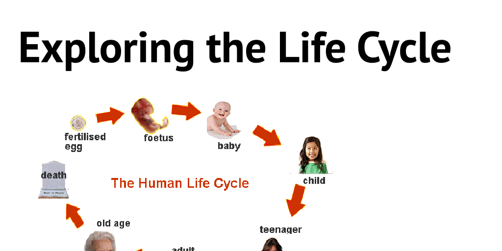 Life cycles and reproduction