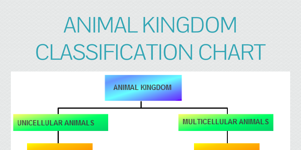 Animal Kingdom Classification Chart By James