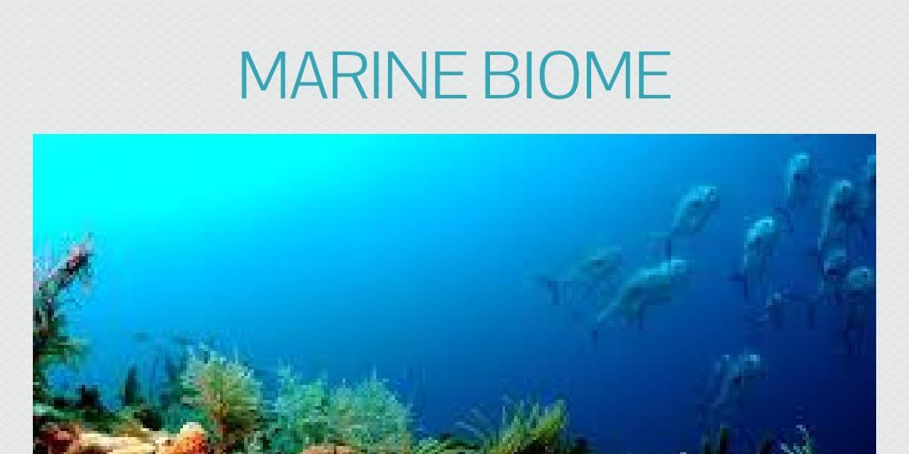 MARINE BIOME by lilbillballinbruh - Infogram