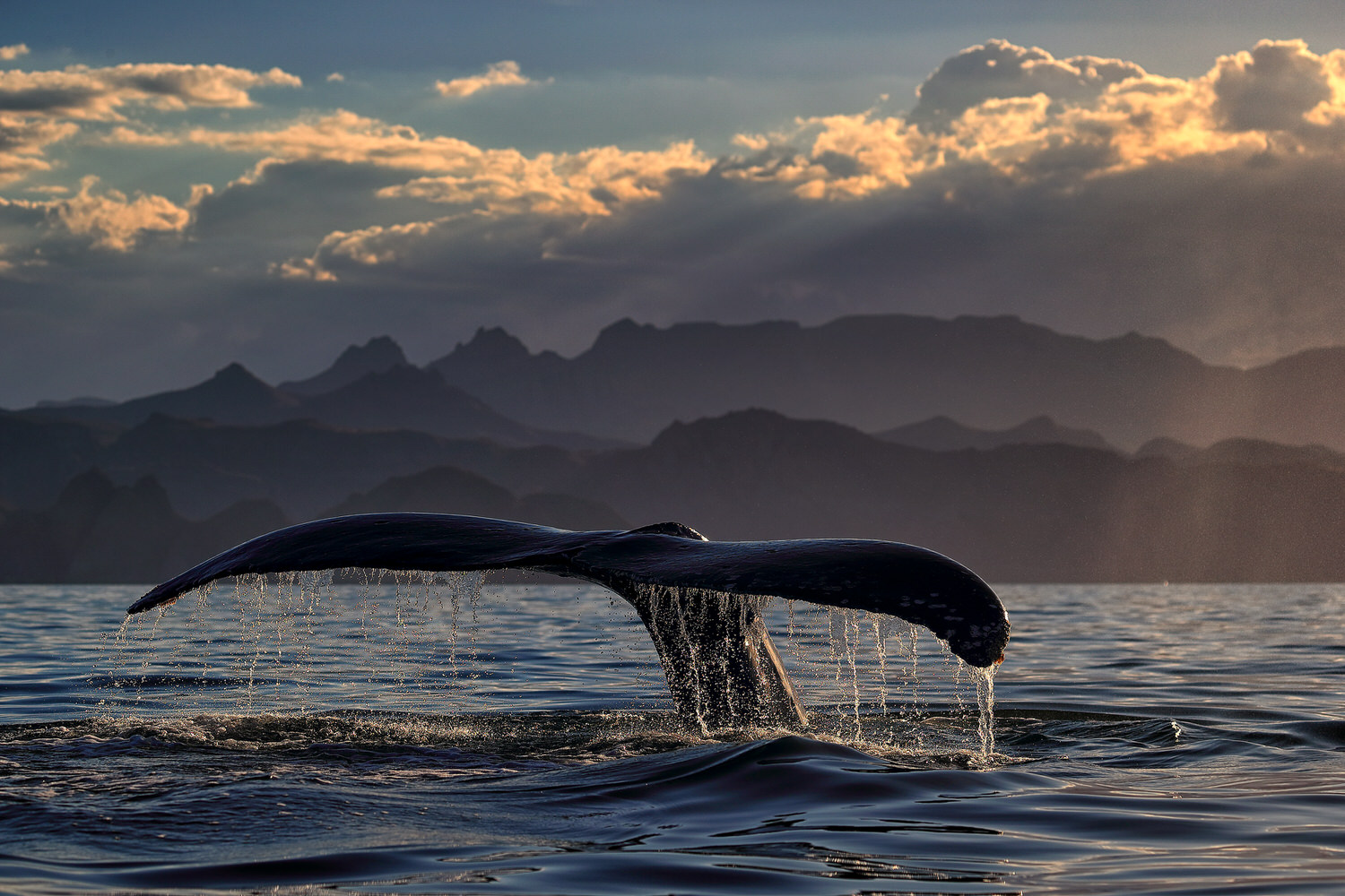 BOOK NOW: Whale Watching on Mexico's Baja California Peninsula
