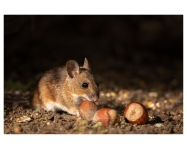 CUSTOMER CASE STUDY: Wildlife photography on Mersea Island during lockdown