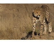 CUSTOMER CASE STUDY: An African adventure with a Canon EOS 550D and EF 100-400mm f/4.5-5.6L IS II USM