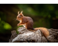 CUSTOMER CASE STUDY: Wildlife Photography on Brownsea Island with a Sony a7R III and Up to 800mm of Glass