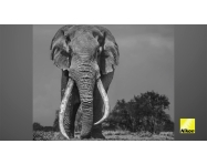 VIDEO: Nikon Ambassador David Yarrow's Special Project: 'Amboseli & Dandora'