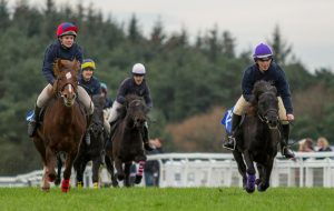 Dartmoor pony racing Exeter
