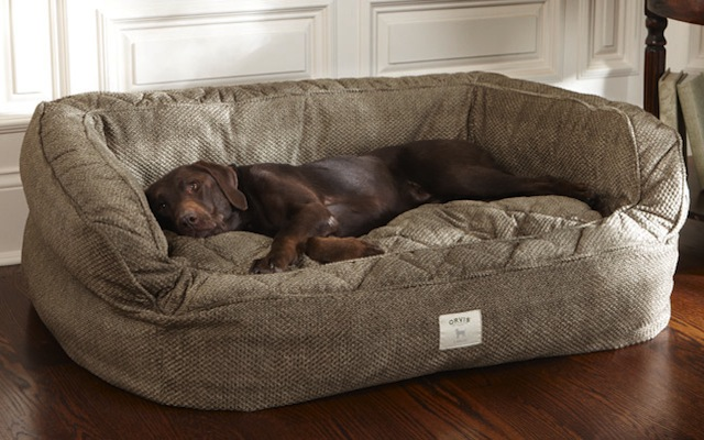 Top Dog Beds To Buy Country Life