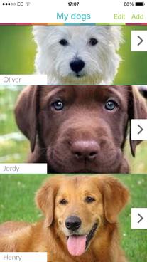 One dog or many