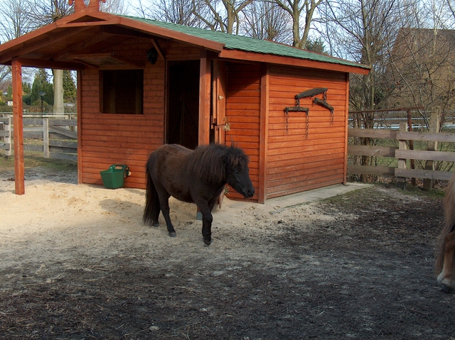 wie viel platz kontakte haben eure pferde hufrehe ecs. Black Bedroom Furniture Sets. Home Design Ideas