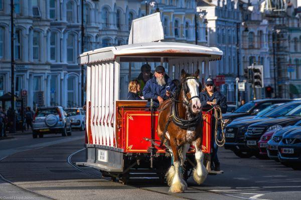 Douglas Bay Horse trams