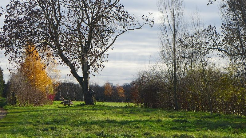Stotfold-Watermill-and-Nature-Reserve--Bedfordshire