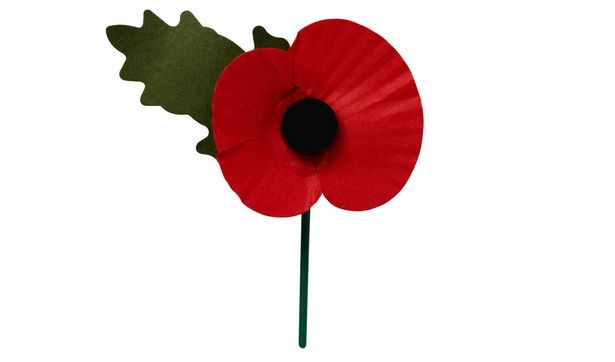Image result for poppy